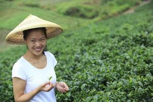 campo de árvores de chá foto