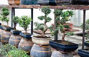 loja de bonsai foto
