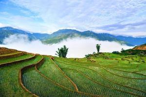 campos de arroz em socalcos em sapa, lao cai, vietnã