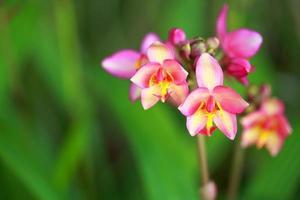 orquídea linda tropical