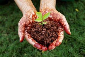mãos segurando uma planta pequena - nova vida foto