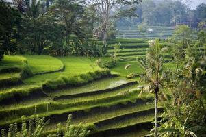 Bali, Indonésia. foto