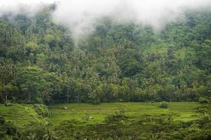 campos de arroz bali foto