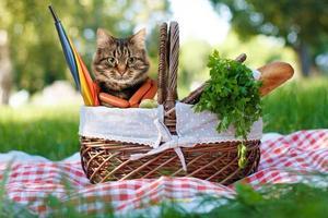 gato engraçado em um piquenique. lindo dia de verão foto