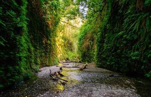 parque nacional da sequóia vermelha