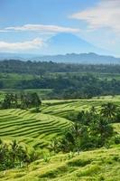 terraço de arroz bali, campo de arroz de jatiluwih foto