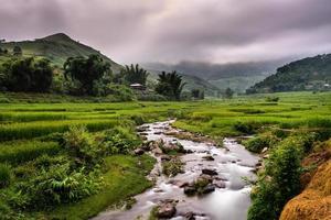 campos de terraços dourados no norte do Vietnã foto