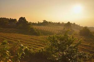 terraço de arroz em maechaem na Tailândia