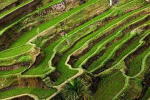 terraços de arroz, tegalalang (bali) foto