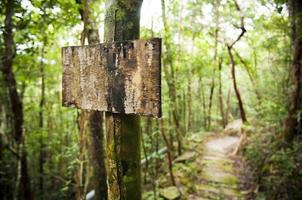 post de sinal de floresta vazia