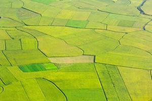 campo de arroz em bac son, vietnã foto