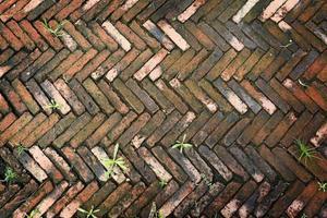 piso de tijolos com musgo. foto