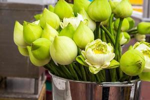 flor de lótus para o povo budista a respeitar foto