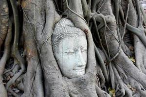 cabeça de Buda coberta por raízes de árvores