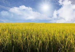 lindo céu e campo de arroz foto
