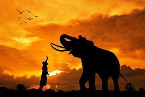 silhueta elefantes e criança