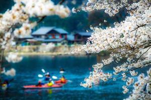 temporada de sakura em kaizu osaki, japão