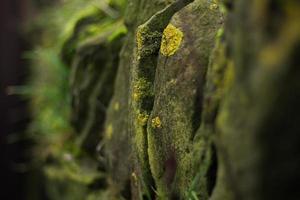 parede de pedra seca