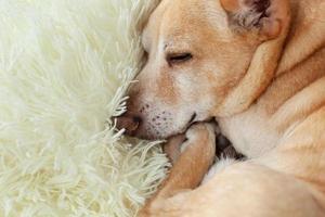 cachorro descansando em uma cama foto
