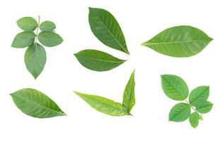 folhas verdes brilhantes sobre fundo branco foto