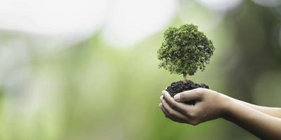 close-up de mãos segurando uma árvore