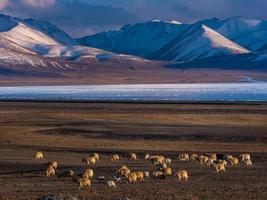 ovelhas em campo com montanhas ao fundo foto