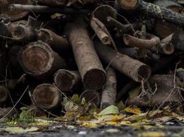 lenha seca em um fundo de folhagem de outono foto