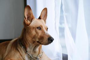 cachorro marrom, sentado ao lado da janela foto
