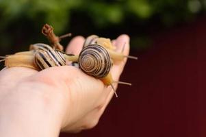 grupo de caracóis na mão foto