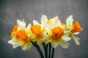 Narciso flores em um vaso foto