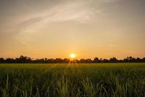 nascer do sol no campo de arroz foto