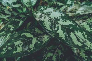 close-up de planta verde