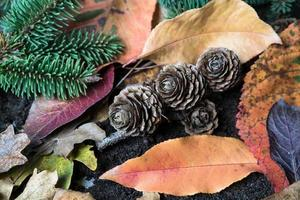 pequenas pinhas nas folhas de outono foto