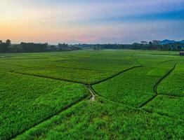 vista aérea do campo de arroz