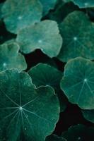 closeup de folhas verdes foto