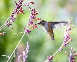beija-flor com flores foto