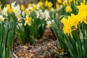 conjunto amarelo de flores foto