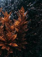 folhas de folhagem marrom foto