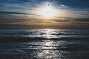 pássaro solo sobre o oceano