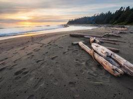 troncos marrons na praia foto