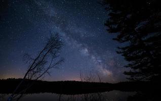 árvores sob o céu estrelado