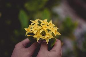mãos segurando flores amarelas