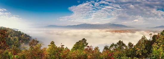 floresta com nuvens e montanhas foto