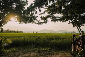 pôr do sol no campo de arroz verde na zona rural foto