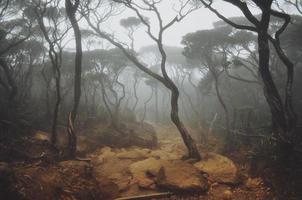 floresta de montanha enevoada foto