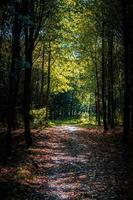 caminho a pé através de árvores na floresta