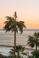 palmeiras perto do corpo de água foto