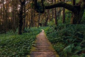 caminho de madeira marrom