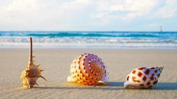 conchas de praia na luz solar foto