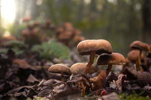 cogumelos no chão da floresta foto